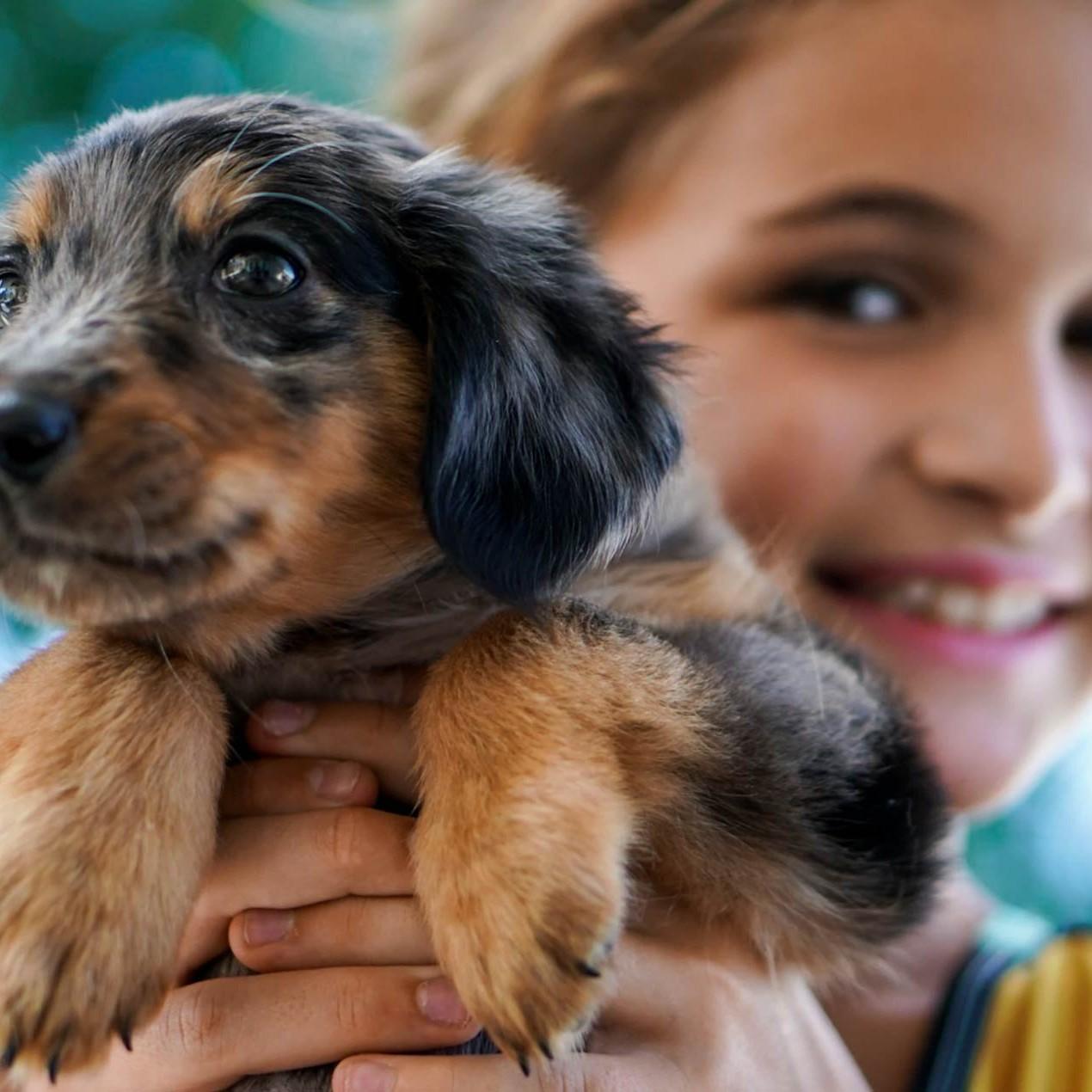 Benefits of having pets in children's social-emotional development